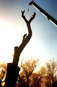 crane_tree_removal